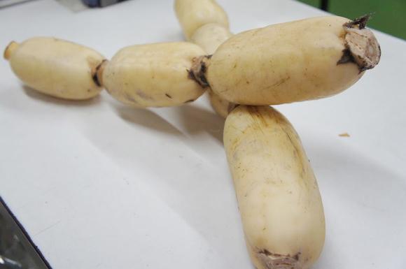 栽培してい るレンコンはどんなものがありますか?